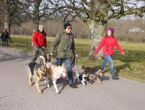 Det är stärkande för själen att leda en hel flock hundar, speciellt hundar som inte känner varandra sedan tidigare och dras med viss problematik. Det är starkt jobbat av deltagarna!