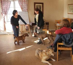 Vi tittar på kommunikation hundar emellan...