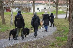 Dagen startar med en flockpromenad.