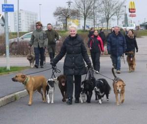 Flockpromenaden är en uppskattad aktivitet bland deltagarna - åtminstone när det är över och man har insett att det inte är så farligt ;)