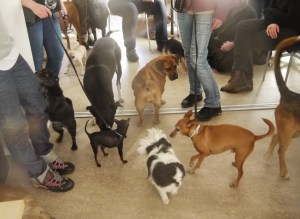 ... och alla hundar var bjudna ;)