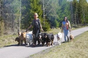 ... och fantastiska hundar som verkligen levererade!